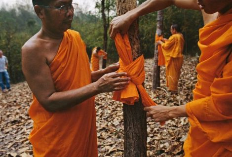 00033_ 07 Buddhist monks tie fabric around tree trunks in the forrest, 2004.